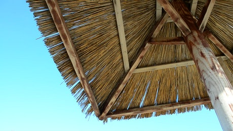 Palm roof on a sunny day