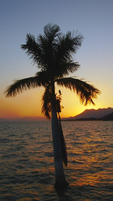 Palm tree in front of the sun