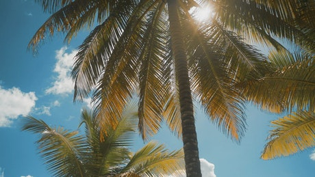 Palm tree on a sunny day