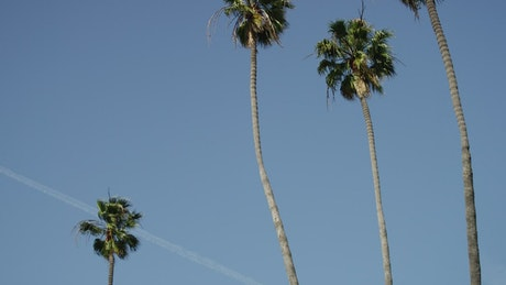 Palm trees and clear blue sky