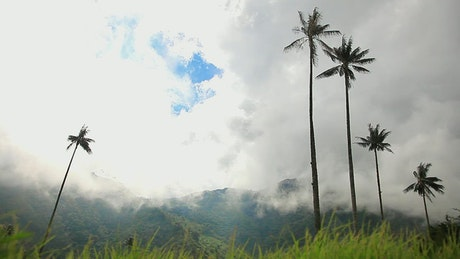 Palm trees in nature
