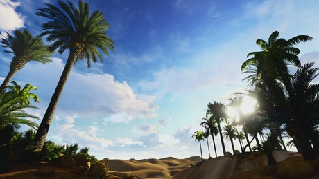 Palm trees in oasis in the Egyptian desert
