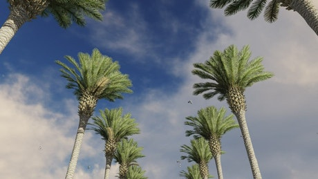 Palm trees with seagulls and clouds overhead