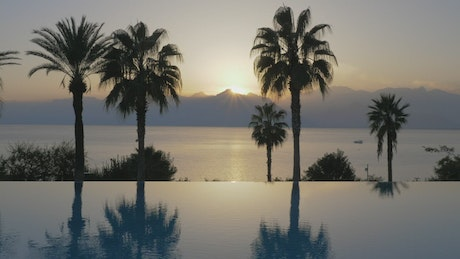 Palms by an infinity pool