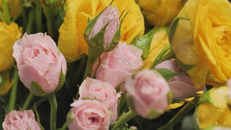 Pan shot of wet flowers, close up