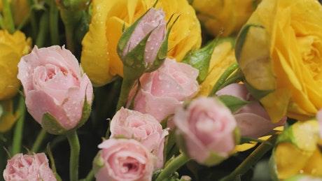 Pan shot of wet flowers, close up