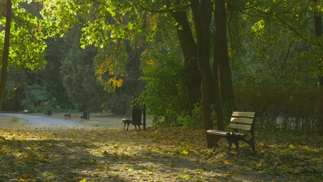 Park and a bench with fallen leaves