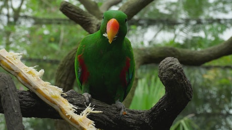 Parrot eating in a tree branch