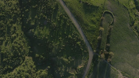 Path that crosses a meadow, aerial shot