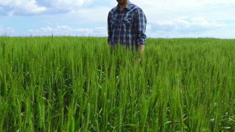 Peasant walking through a wheat field
