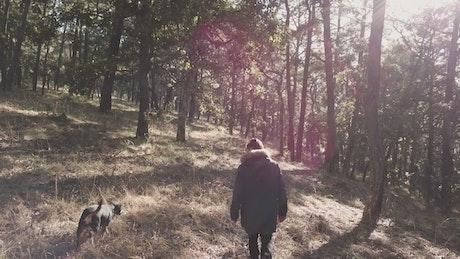 Person and dog walk among trees