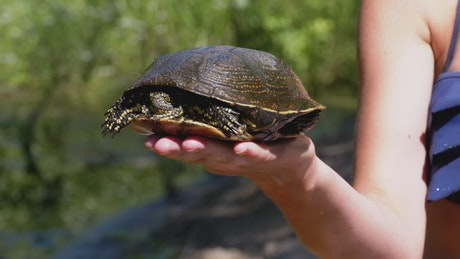 Person carrying a turtle in his hand in nature