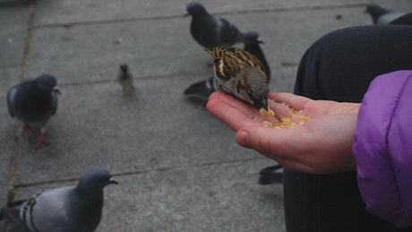 Person feeding birds with his hand on the street