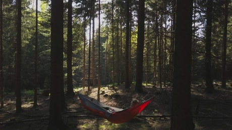 Person in a hammock in the middle of a forest