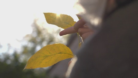 Person touching yellow leaves