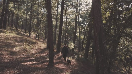 Person walking a dog in the forest