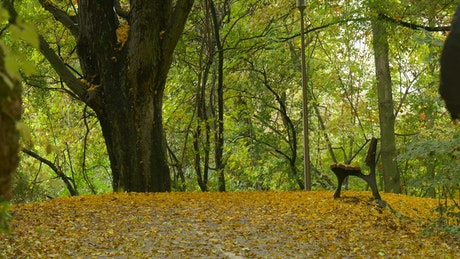 Person walking through a forest in autumn