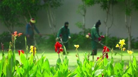 Personel cutting the garden grass