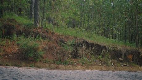Pickup truck driving along an asphalt road through a forest