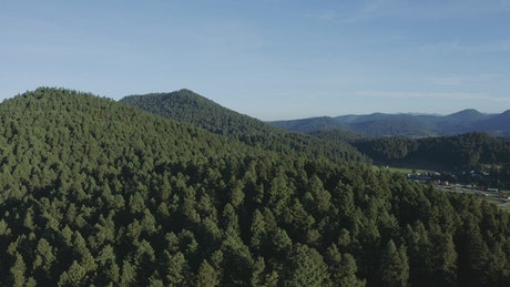 Pine forest on a mountain range tour, aerial shot