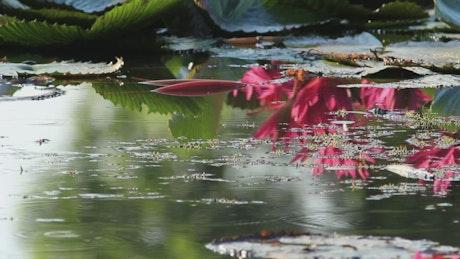 Plants across a still pond