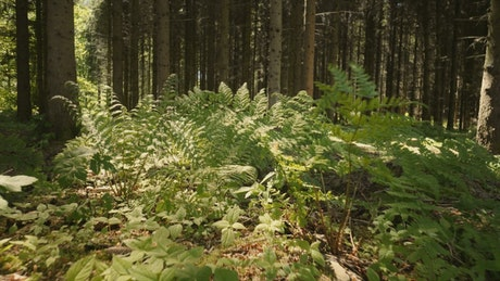 Plants growing in a forest
