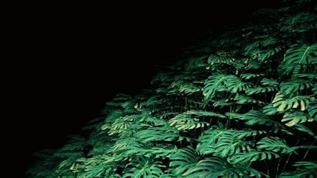 Plants in the dark, loop video