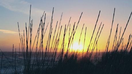 Plants on the seashore at sunrise