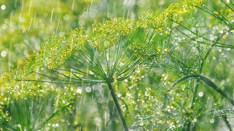 Plants under the rain