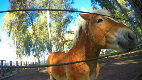 Playful horse in the corral