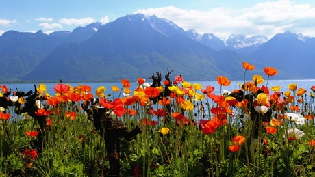 Poppy flowers and mountains landscape