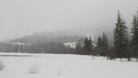 Prairie snow in a pine forest