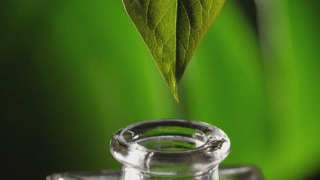 Preparing alternative therapy oil