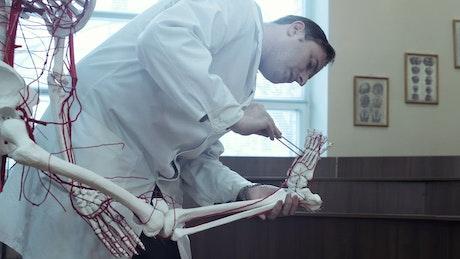 Professor teaching human anatomy at the University