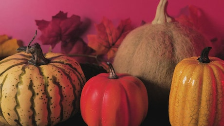 Pumpkins with a pink background