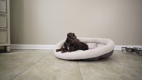 Puppy laying in their bed
