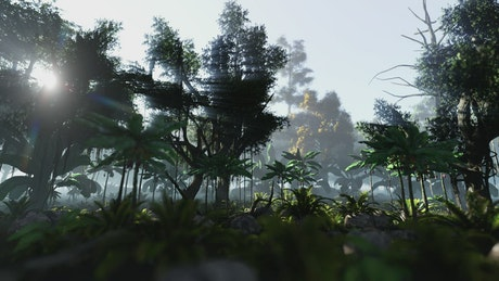 Quiet morning in the jungle
