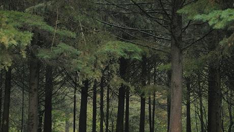 Quiet treetop forest