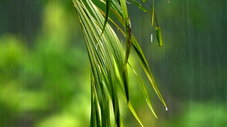 Rain falling against a fern