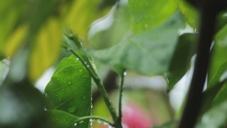 Rain falling gently on garden leaves