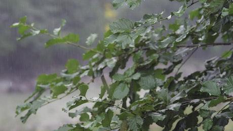Rain falling in slow motion
