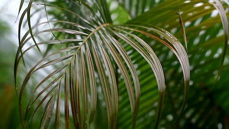 Rain falling softly on ferns