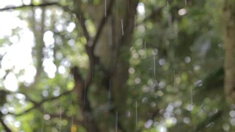 Rain falling through park trees