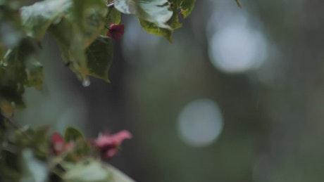 Rain in the wild