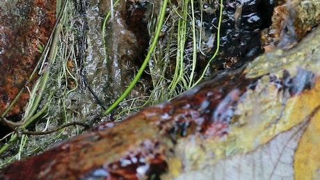 Rain water running through woodland