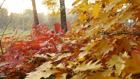 Red and yellow autumn leaves