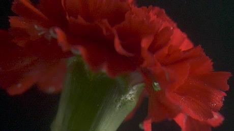 Red flower underwater