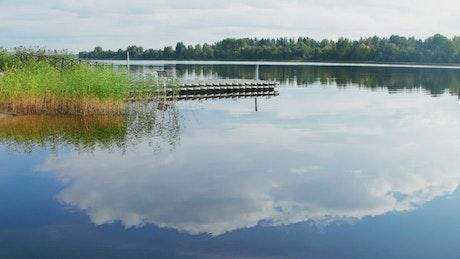Reeds growing in a lake