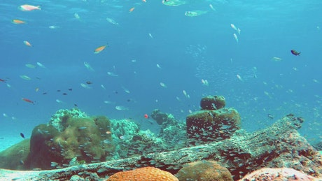 Reef full of biodiversity