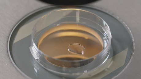 Researcher working with a petri dish